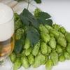51% Off Home-Brewing Beer Starter Kit