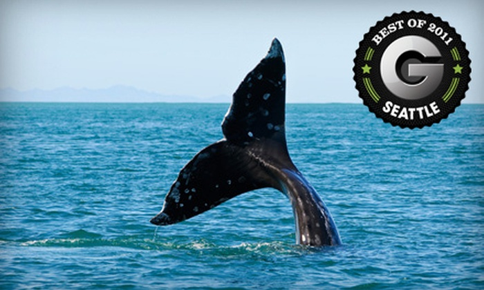 Deception Pass Tours - North Whidbey Island: $34 for a Gray-Whale-Watching Tour in March or April from Deception Pass Tours in Oak Harbor (Up to $69 Value)