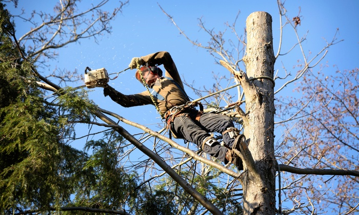 Monster Tree Service - Allentown / Reading: $250 for $500 Worth of Tree-Care Services from Monster Tree Service