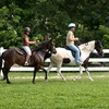 Up to 51% Off Horse-Riding Lessons in Homestead
