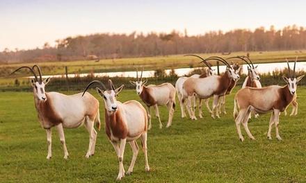 Safari Ride at Safari Wilderness Ranch (Up to 40% Off)