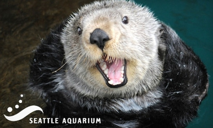 Seattle Aquarium - Pike Place  Market: $10 for One Day's General Admission to the Seattle Aquarium (Up to $19 Value)