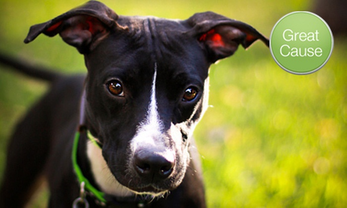 Lucky Dog Rescue, Inc. - Houston: If 40 People Donate $10, Then Lucky Dog Rescue, Inc. Can Supply ID Microchips for Dogs Transitioning to Adoptive Homes