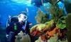 Squalo Divers - North Miami Beach: One Scuba-Diving Class or One Scuba-Diving Class and Two Ocean Dives at Squalo Divers in North Miami Beach