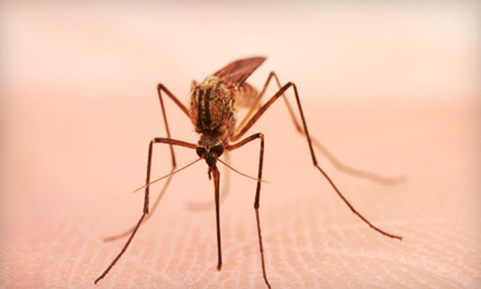 Mosquito Control of Mississippi - Clinton: $35 for Up to a Half Acre of Mosquito Barrier Spraying from Mosquito Control of Mississippi ($70 Value)
