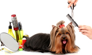 A Passion For Pets Daycare: One Full Grooming for a Small, Medium, or Large Dog at A Passion For Pets Daycare (Up to 55% Off)
