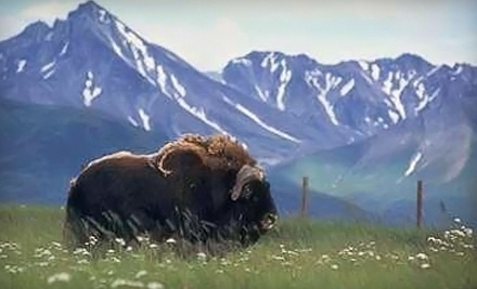 Day Pass for Two - The Musk Ox Farm in Palmer