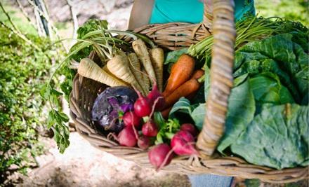 1-Month CSA Membership in May from Tilian Farm (a $200 value) - Tilian Farm, Honest Eats Farm, & Meristem Farm in Ann Arbor
