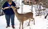 North Georgia Zoo /Wildlife Wonders - Lakeshore: Winter Wonderland Tour for Two or Four at North Georgia Zoo (Up to 56% Off)