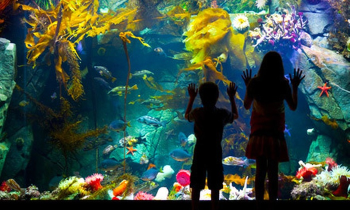 Shaw Ocean Discovery Centre - Sidney: $14 for a Shaw Ocean Discovery Centre Outing for Two Adults and Up to Four Kids in Sidney (Up to $67.20 Value)