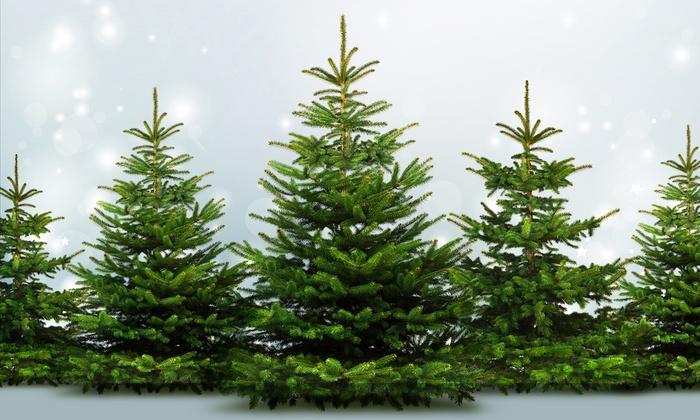 Christmas Trees - Edgewater Christmas Tree Barn | Groupon