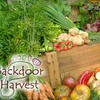 Backdoor Harvest - St Louis: $67 for a Vegetable-Garden Consultation from Backdoor Harvest ($150 Value)