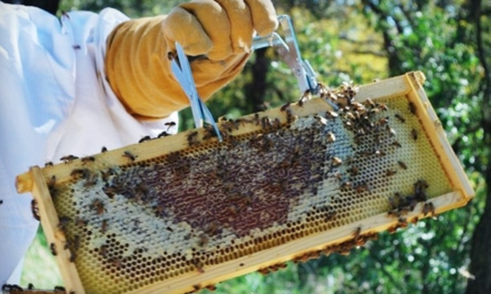 Round Rock Honey  - Copper Canyon: $39 for One Intro to Beekeeping Class from Round Rock Honey ($125 Value)