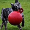 Up to 33% Off Jolly Pets Tug-n-Toss Dog Toys