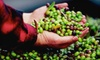 Pietra Santa Winery - Hollister: Winery and Olive-Oil-Press Tour and Tasting Package for Two or Four at Pietra Santa Winery in Hollister (Up to 69% Off)