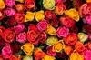 A Touch of Elegance Florist - East Louisville: $60 for $95 Worth of Plants — A Touch Of Elegance Florist