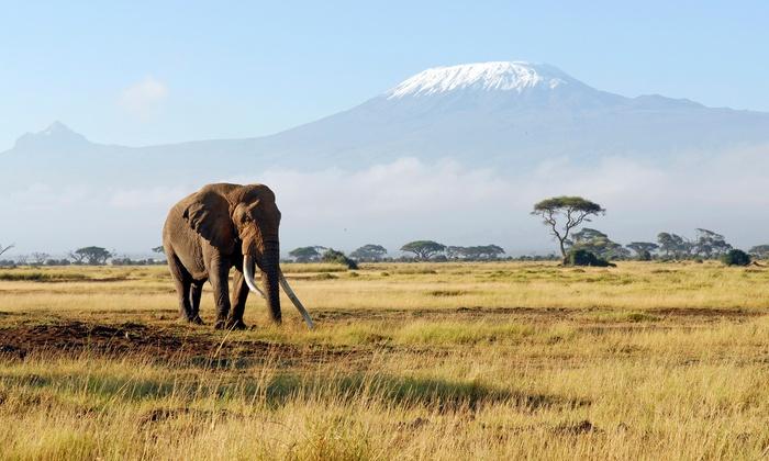 7-Day Kenya Safari with Airfare from Gate 1 Travel
