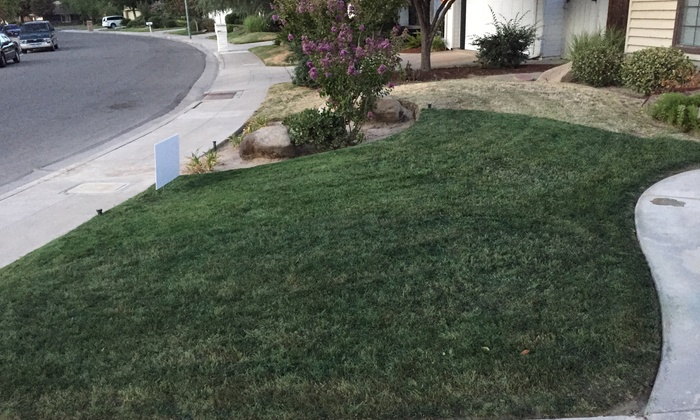 Ultimate Property Concepts - Fresno: $60 for $100 Worth of Lawn Painting — Ultimate Property Concepts