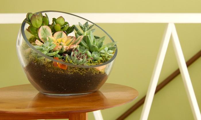 JuicyKits - Los Angeles: DIY Terrarium Kits and Accessories at JuicyKits (Up to 50% Off)