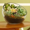 Up to 50% Off DIY terrarium kits and accessories
