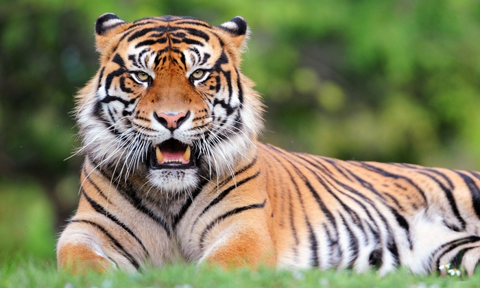 Zoo Miami - Zoo Miami: $195 for  VIP Ticket to Feast with the Beasts and a Private Tour for Four at Zoo Miami ($470 Value)