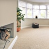 Up to 58% Off Carpet or Furniture Cleaning