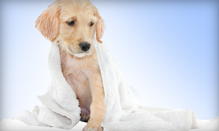 Happy Hounds  - Colorado Springs: Dog Spa Outing for Small, Medium, or Large Dogs at Happy Hounds (Up to Half Off)