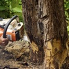 45% Off Tree-Removal Services