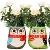Winter White Roses in Ceramic Owl Gift Pot