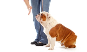 Adore A New You: Four-Week Dog-Obedience Course from Adore A New You (55% Off)