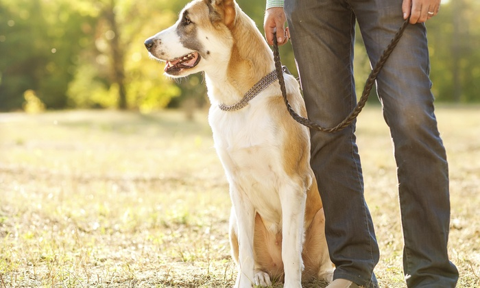 Woof Pack Walkers - San Diego: Two Dog Walks from Woof Pack Walkers (39% Off)