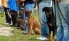 38% Off Self-Serve Dog Washes