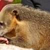 Up to 46% Off Animal Sanctuary Sponsorship