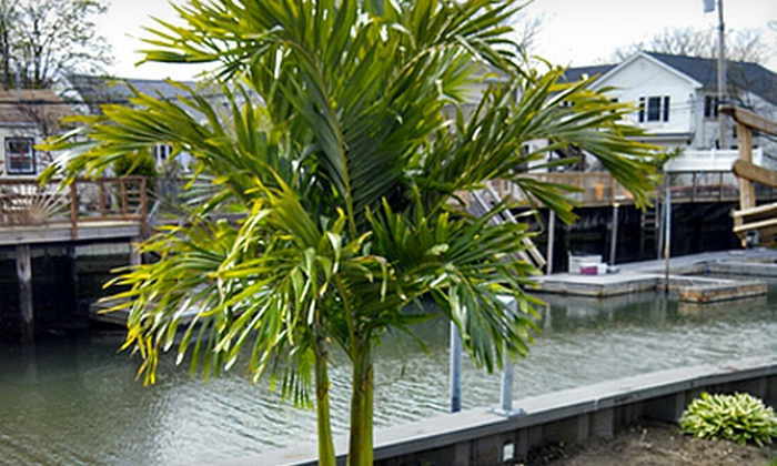 Island Wide Palm Trees - Hauppauge: Christmas Palm Tree from Island Wide Palm Trees (67% Off). Three Options Available.