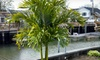 Island Wide Palm Trees - Hauppague - Oakdale: Christmas Palm Tree from Island Wide Palm Trees (67% Off). Three Options Available.