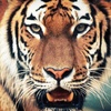 Austin Zoo – Up to 51% Off Visits