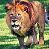 Up to 43% Off at Lion Country Safari