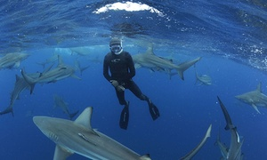 Blue Wilderness: Shark Cage Diving or Snorkeling Experience for Two for R1 450 with Blue Wilderness (34% Off)