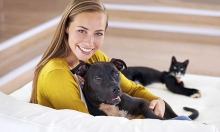 Esterilización o vacuna de Puppy, heptavalente y/o rabia para perro o gato o desde 14,90€ en UrquiCan Centro Veterinario