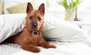 "Fieldstone Animal Inn: $29 for ""The Works"" Pet Spa Package at Fieldstone Animal Inn ($60 Value)"