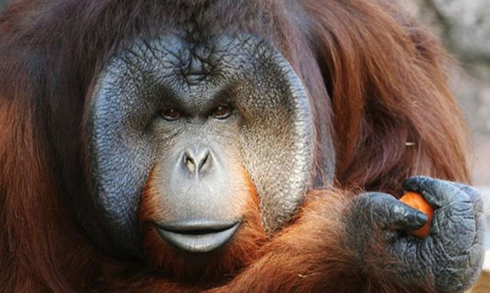 Jackson Zoo - Jackson: $20 for Visit for Two Adults and Two Children to Jackson Zoo ($32 Value)