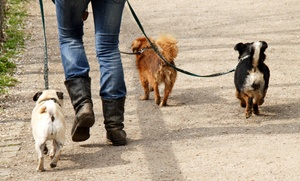 Jenn's Dog Walking And Sitting: $10 for $20 Worth of Services at Jenn's Dog Walking and Sitting