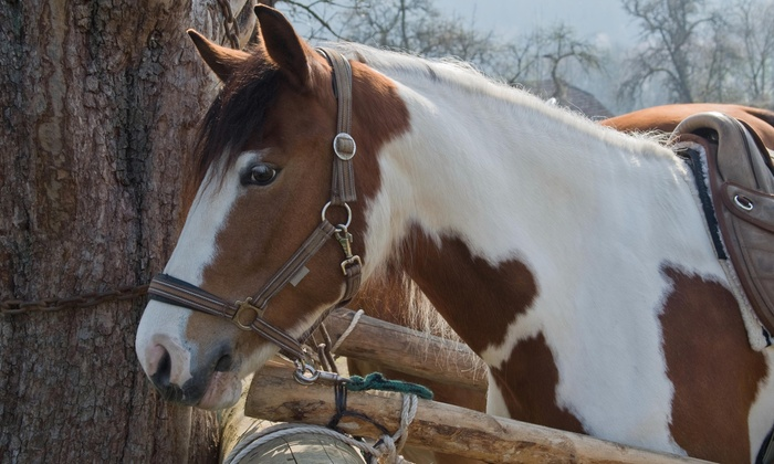 B And B Ranch - Putnam Valley: $36 for $65 Worth of Horseback Riding — B and B Ranch