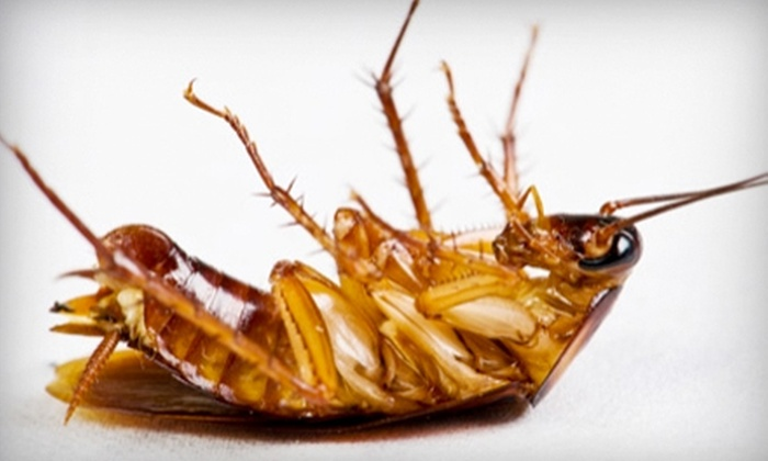 Bad Bugs Pest Control - Calera: $29 for an Interior and Perimeter Pest-Control Treatment from Bad Bugs Pest Control ($95 Value)