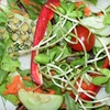 Half Off Raw, Vegan Cuisine at Green Wave Cafe