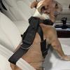 Goodyear Pet Car Harness