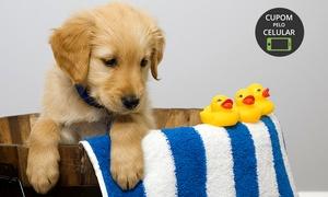 Patas e Asas: Patas e Asas – Osasco: 7 procedimentos para cães de pequeno e médio porte