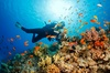 Corso di sub con pratica in mare