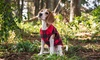 K9 Resorts Daycare & Luxury Hotel - Horsham: Dog Boarding and Daycare at K9 Resorts Daycare & Luxury Hotel (Up to 52% Off). Three Options Available.