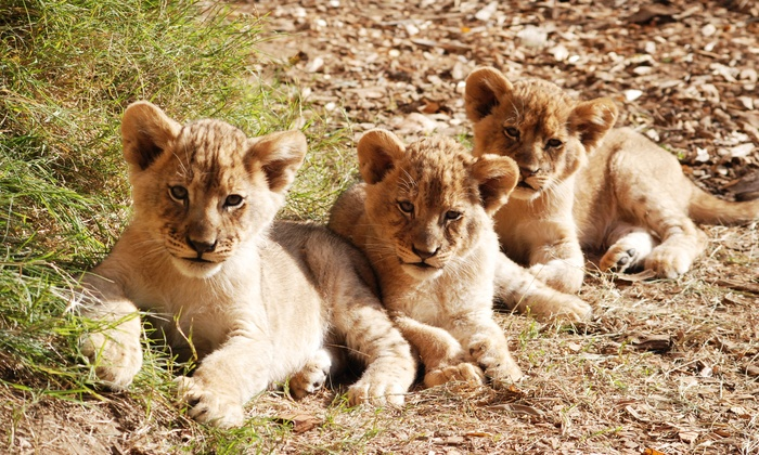 Sacramento Zoo - Southwestern Sacramento: $25 for Weekday Fun for Four with Rides at Sacramento Zoo(Up to $63 Value)